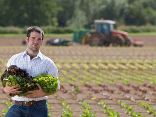 PSR Marche 2014-2020: aiuti all'avviamento per l'insediamento di giovani agricoltori