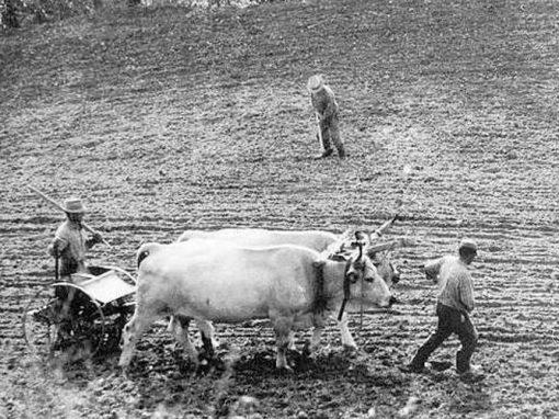 Solchi: raccontare al futuro le tradizioni del mondo contadino