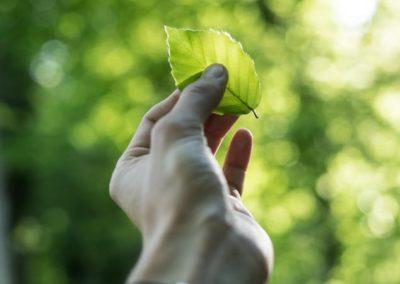 Cibo, qualità della vita, ambiente e sostenibilità dei sistemi territoriali